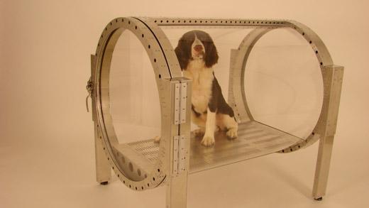 airpressdog.jpg
