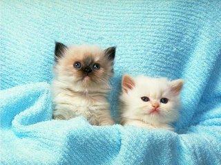 cat_0160.jpg