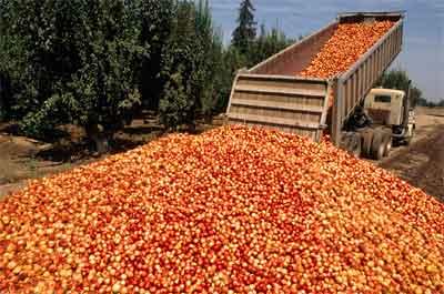 dumpedfruit400px.jpg