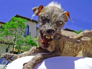 ugly_dog.jpg