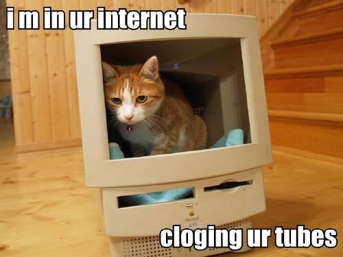 i m in ur internet cloging ur tubes