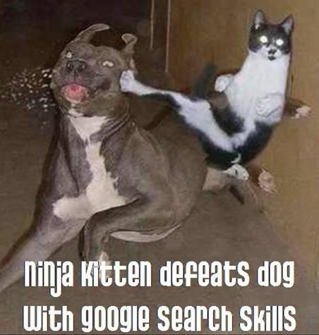 ninja-kitten-defeats-dog-with-google-search-skills-always