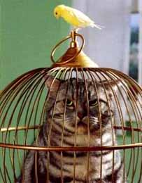 caged-cat-and-canary