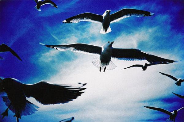 lomo-seagulls