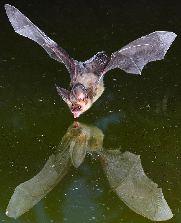 How_to_photograph_a_bat_02