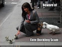 duckscam