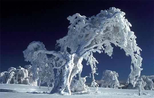 SnowBeech