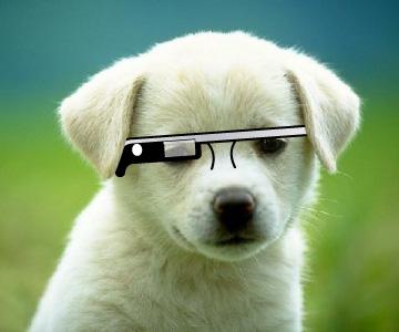 puppy glasses