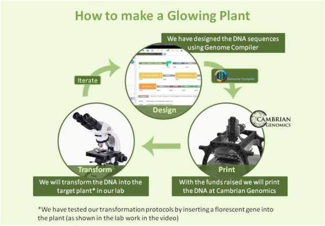 glowing-plant-2