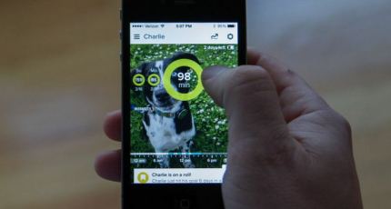 One Week With Whistle's New Activity Tracker For Dogs
