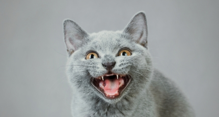 """Epic Reddit Prank """"Cat Facts"""" Is Now An App That Lets You Text Troll"""