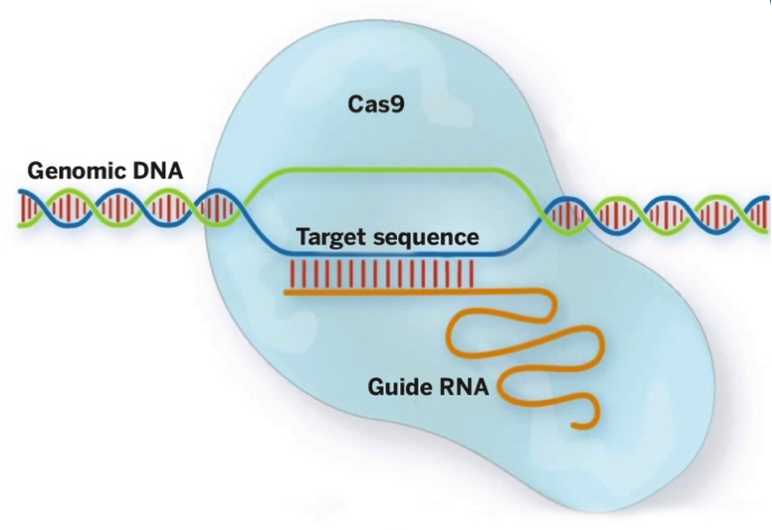 Genome1
