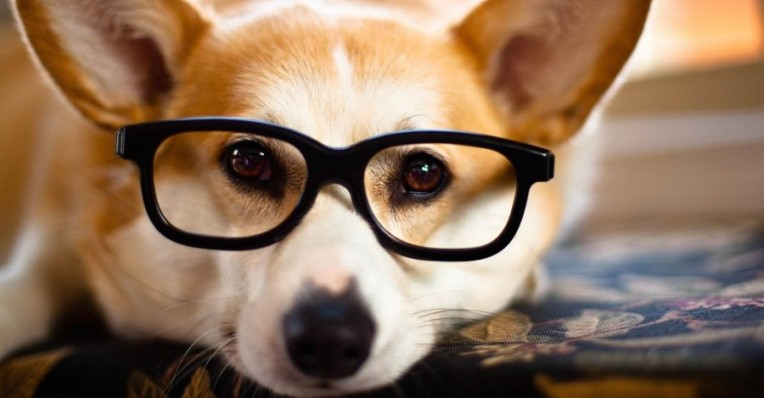ba285564c36 Opternative s Online Eye Exam Gets You A Glasses Prescription From Home