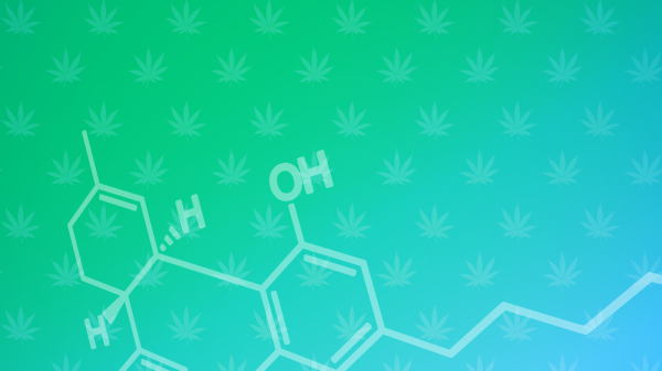 Cannabis processing startups hope to unlock new chemicals and treatments