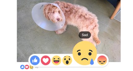 Facebook Enhances Everyone's Like With Love, Haha, Wow, Sad
