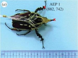 bugbot illo1