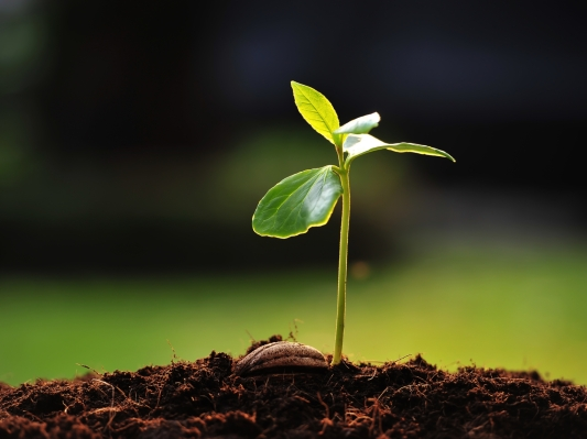 The case for corporates to fill the seed vacuum