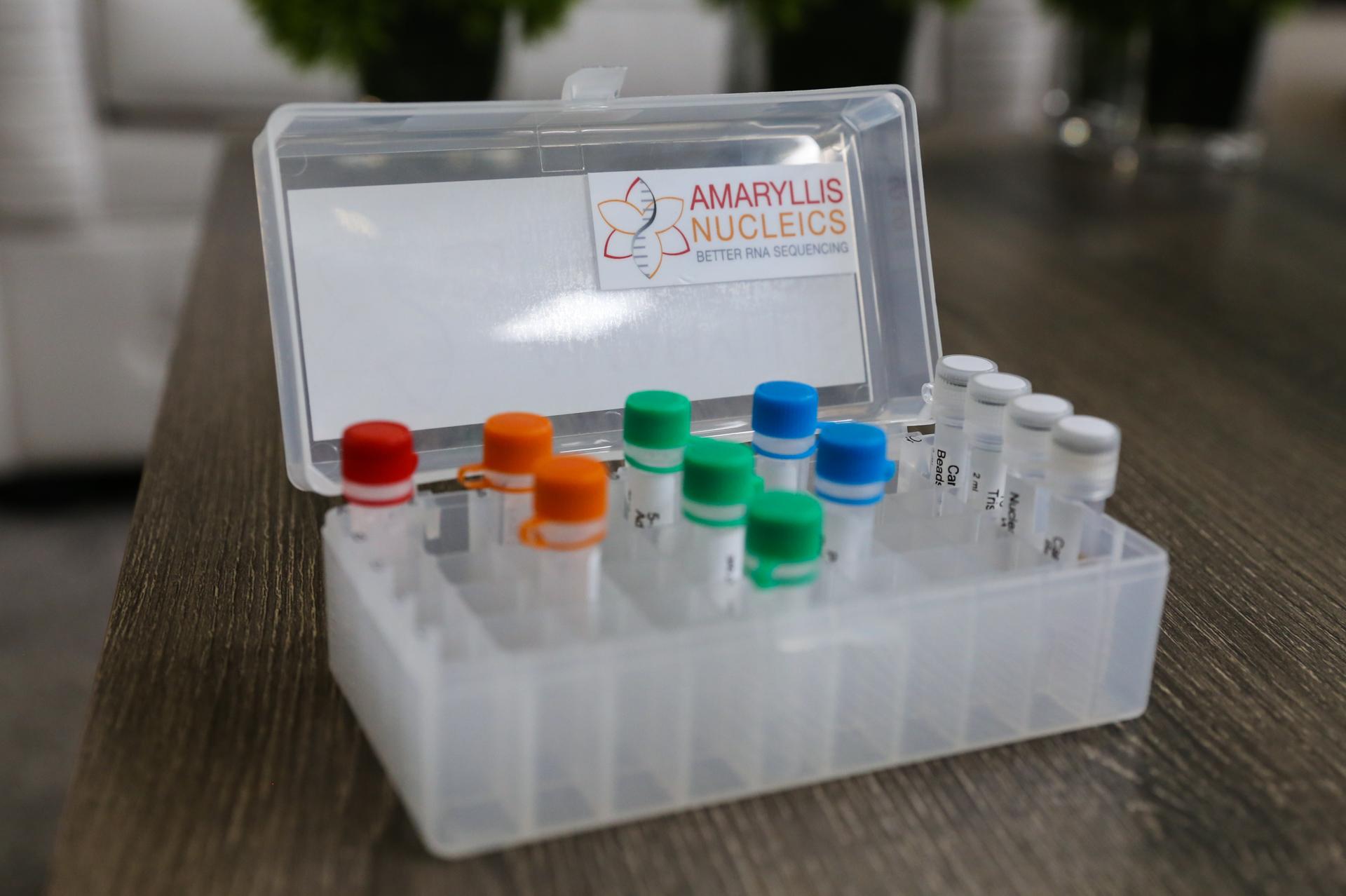 disrupt_sf16_amaryllis-2768