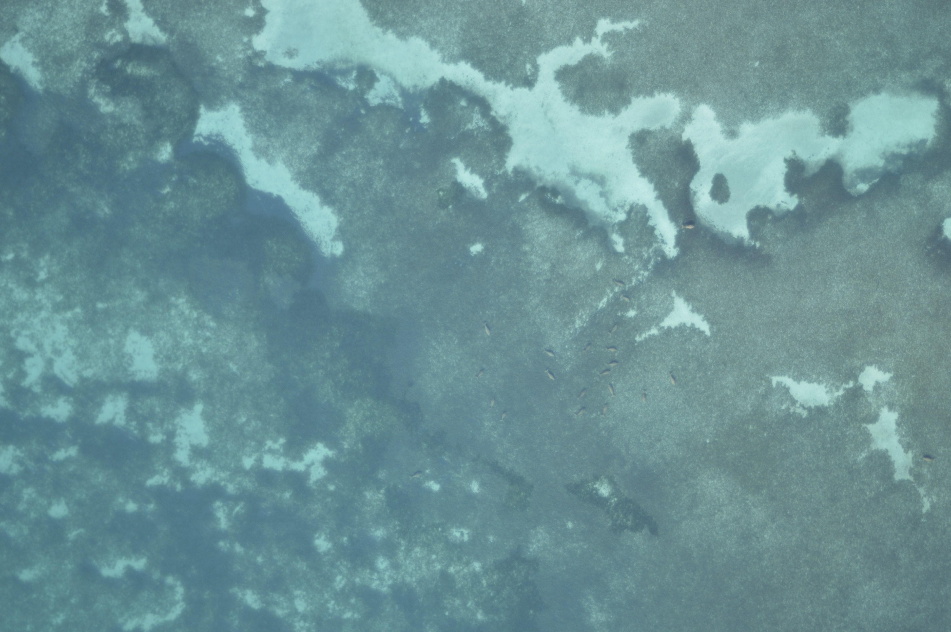 dugong-30aftf2f2_dsc1360
