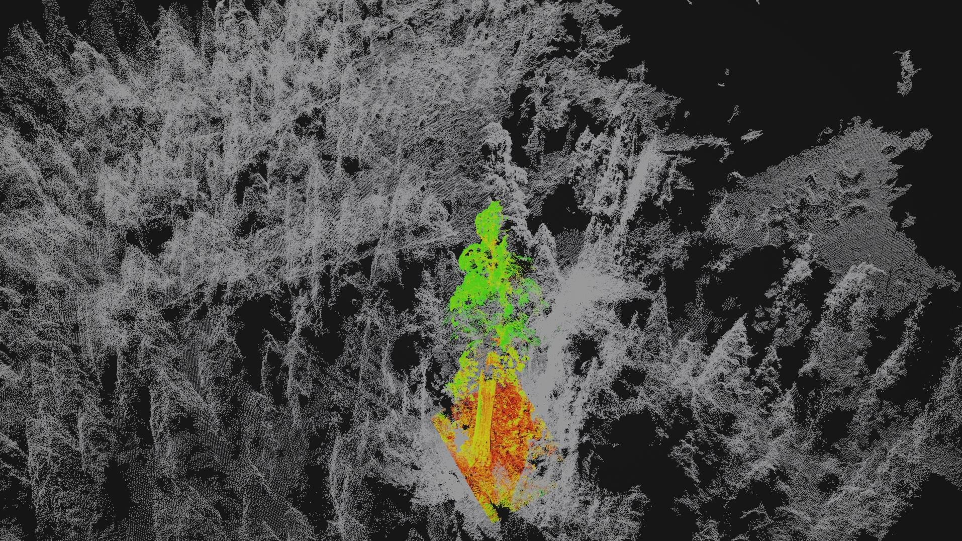 Berkeley project tests tracking imperiled forests with 3D