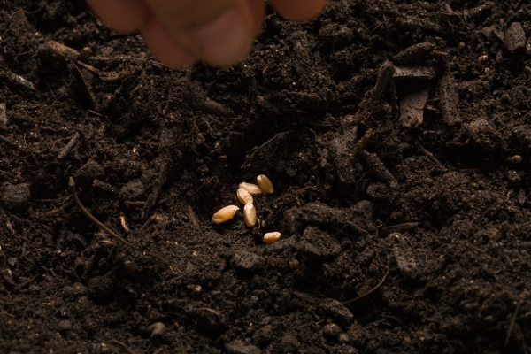Is seed investing still a local business? – TechCrunch
