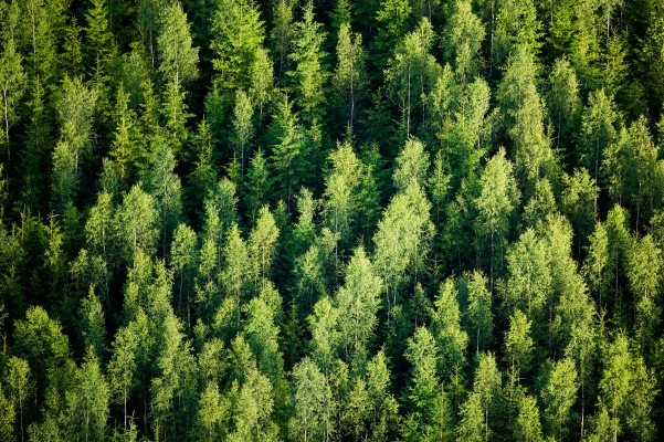 SilviaTerra wants to bring the benefits of carbon offsets to every landowner everywhere