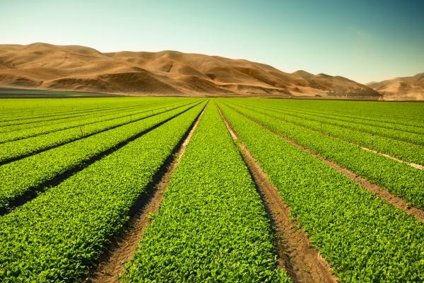 OneSoil raises $5 million for its farm monitoring tech