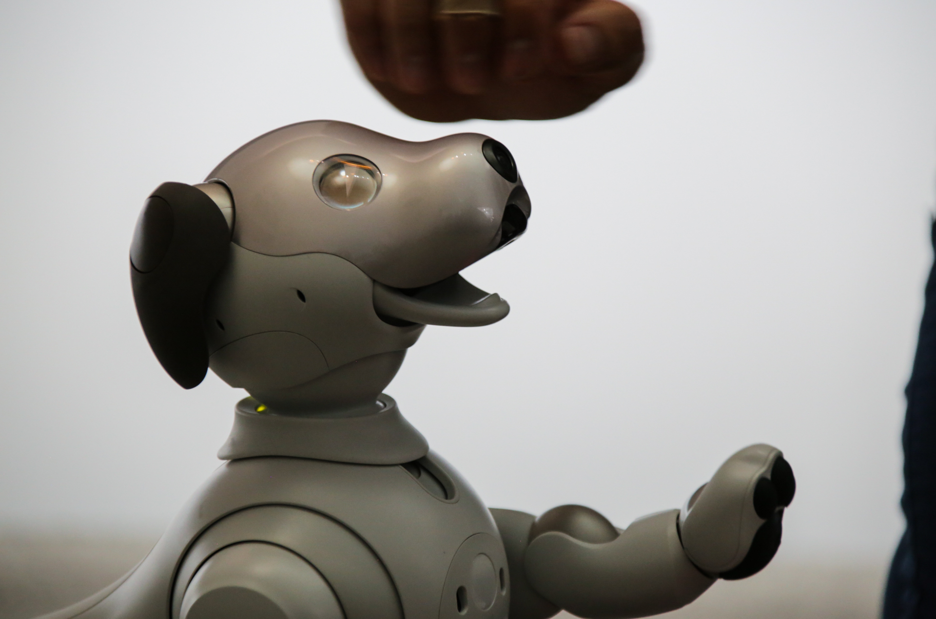 Sony's adorable new Aibo comes to the US in Sept, priced at $2,899