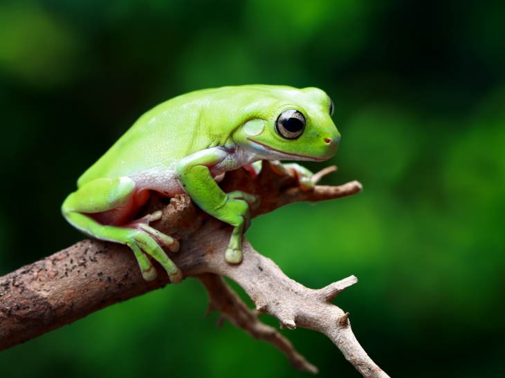 frog - Picture Of A Frog