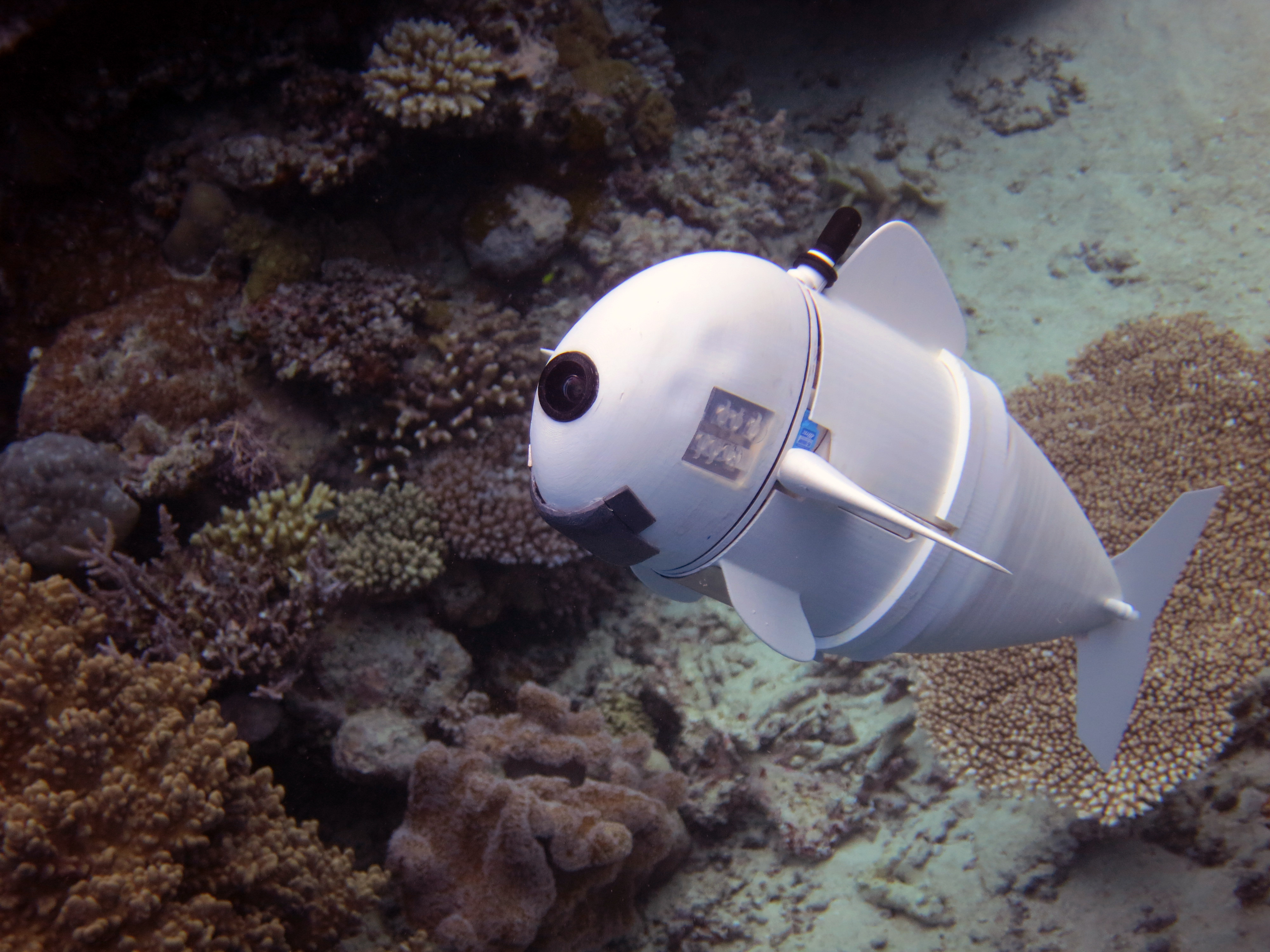 3D printed soft robot fish swims and blends into natural habitat