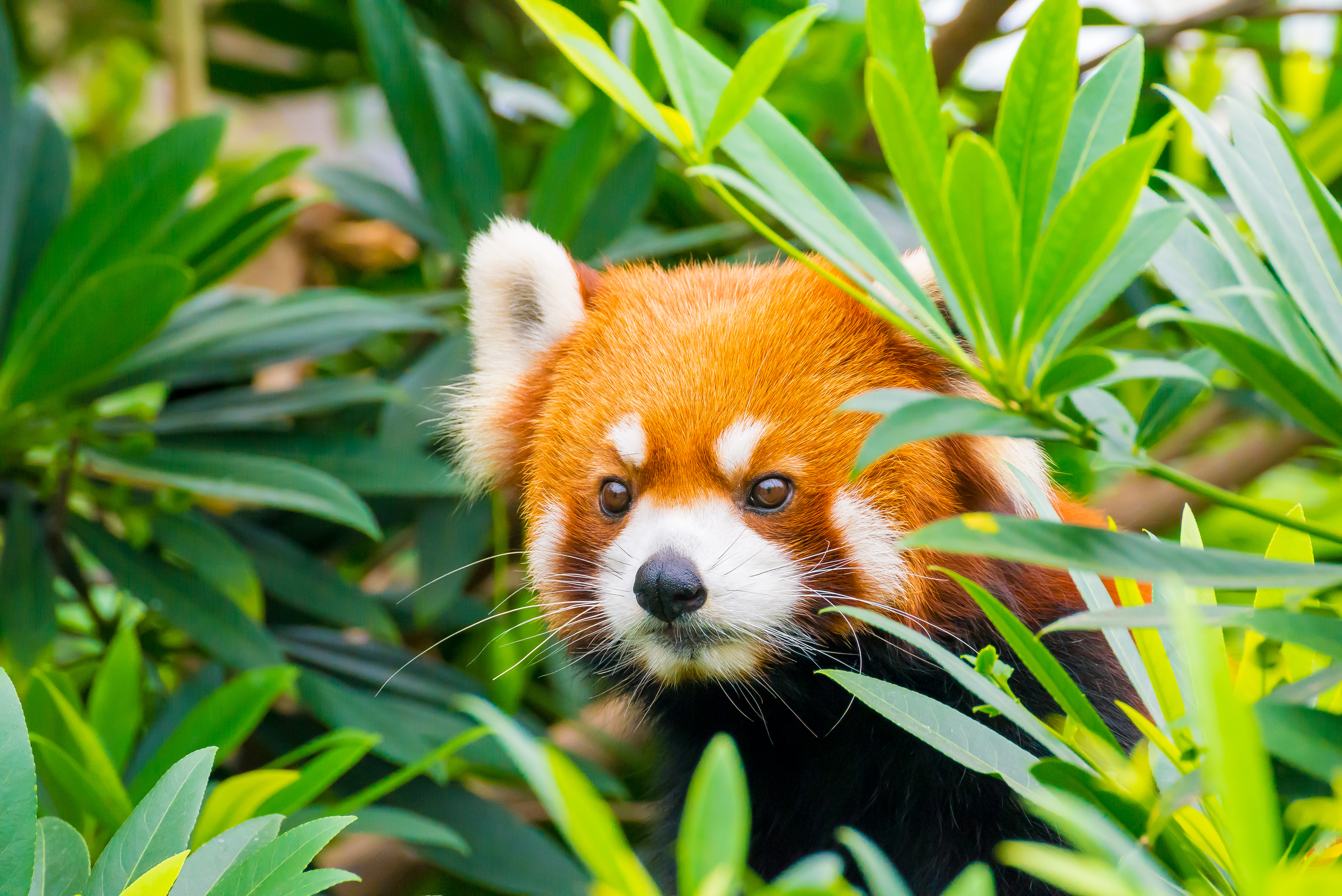 Firefox can now block those annoying notification requests