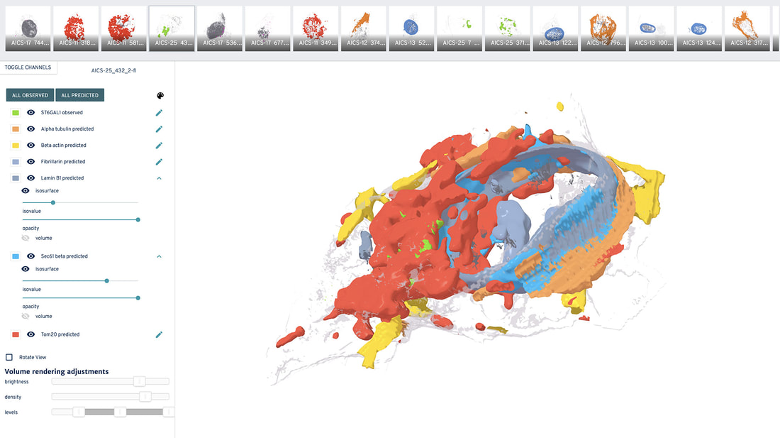 Allen Integrated Cell is a powerful tool for visualizing biology in 3D
