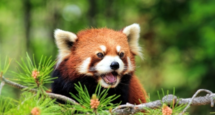 Firefox gets speedier tab switching, a new accessibility tool for