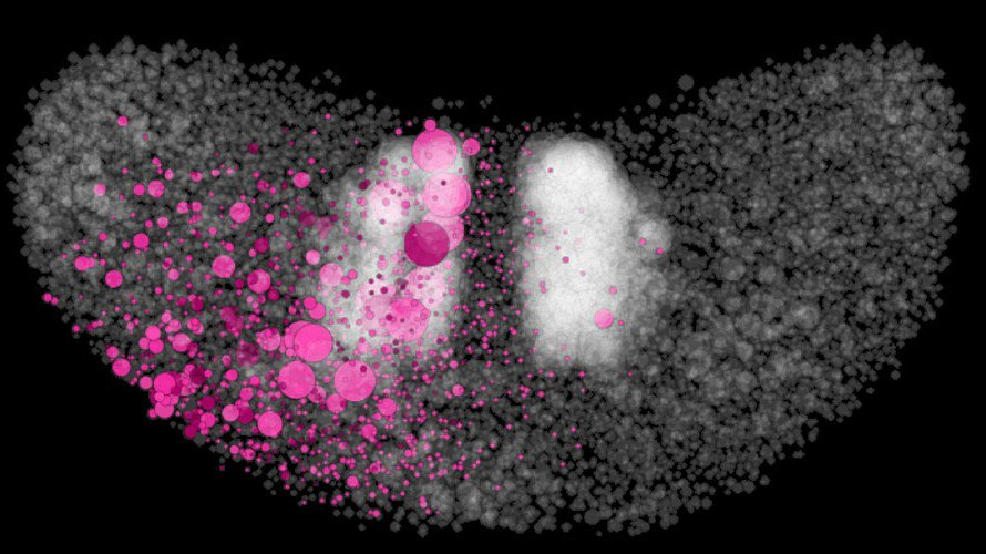 Graphika visualizes Twitter's filter bubbles in the US