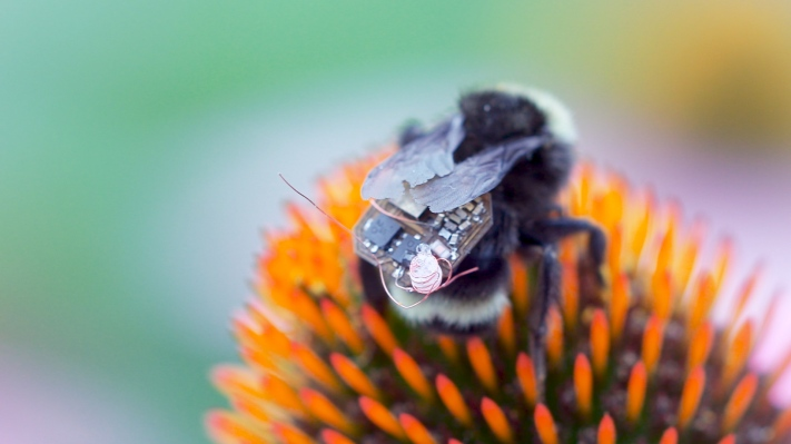 Bumble Bees Bearing High-tech Backpacks Act as a Living Data Collection Platform