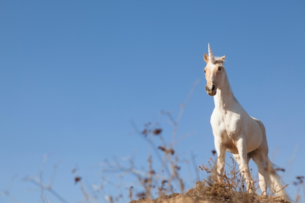 Comment on The Crunchbase Unicorn Leaderboard is back, now with a record herd of 452 unicorns by Matt Parker