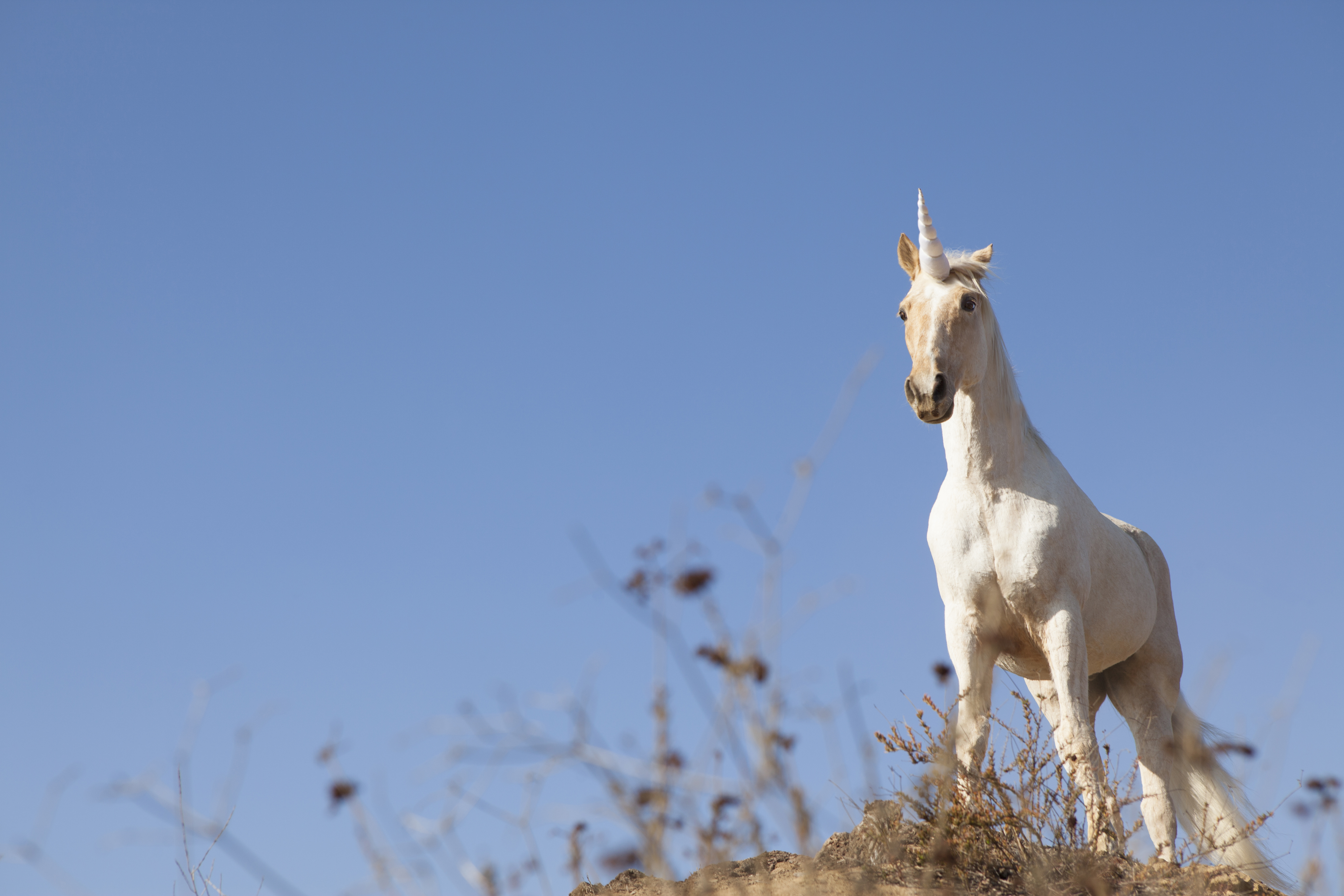 techcrunch.com - Kate Clark - Startups Weekly: Will Trump ruin the unicorn IPOs of our dreams?