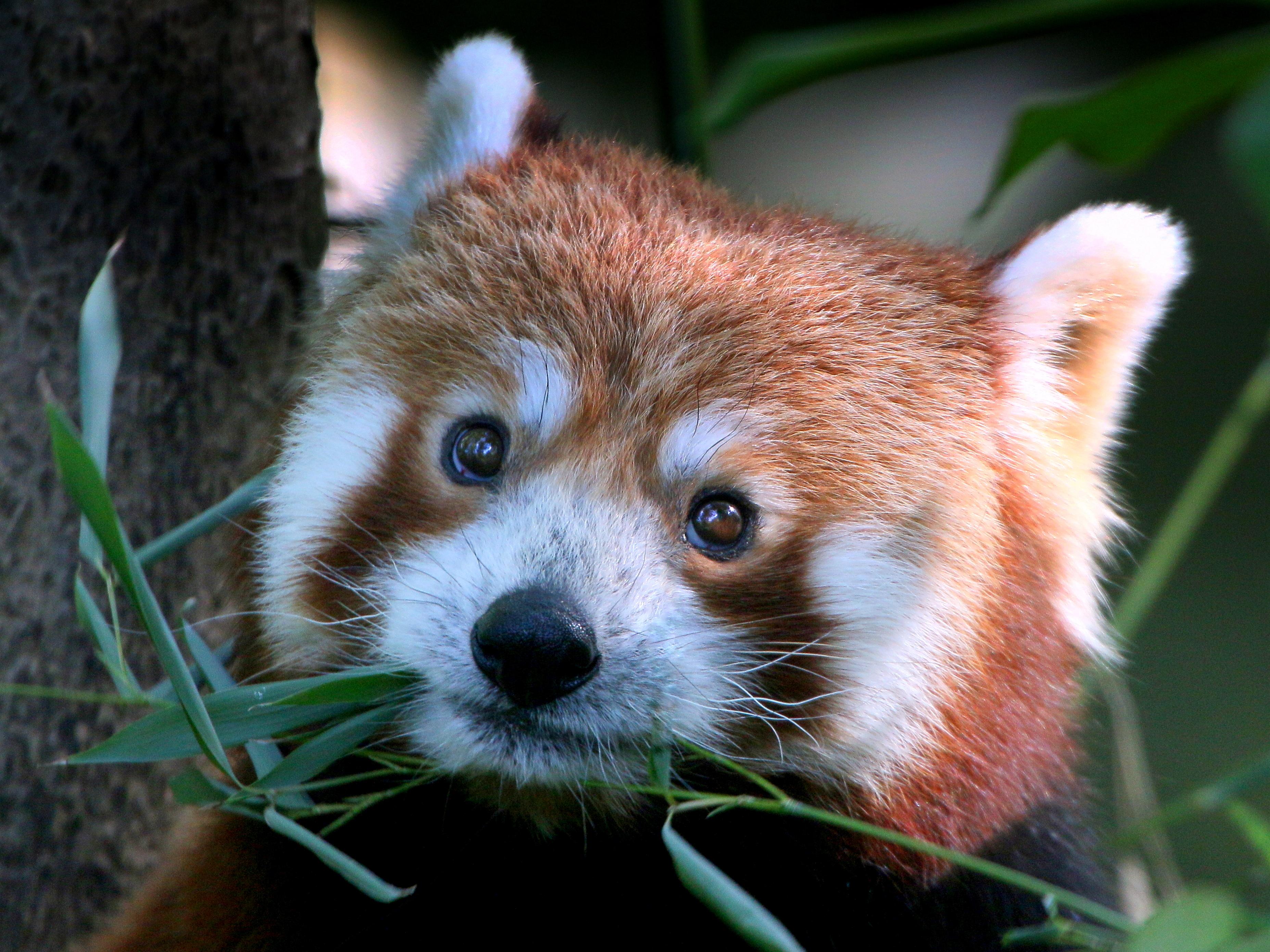 techcrunch.com - Frederic Lardinois - Firefox is now a better iPad browser