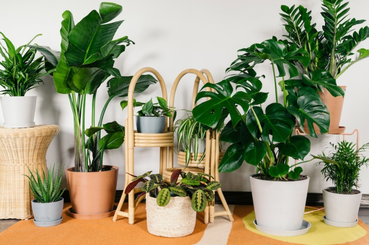 hire Indoor plants