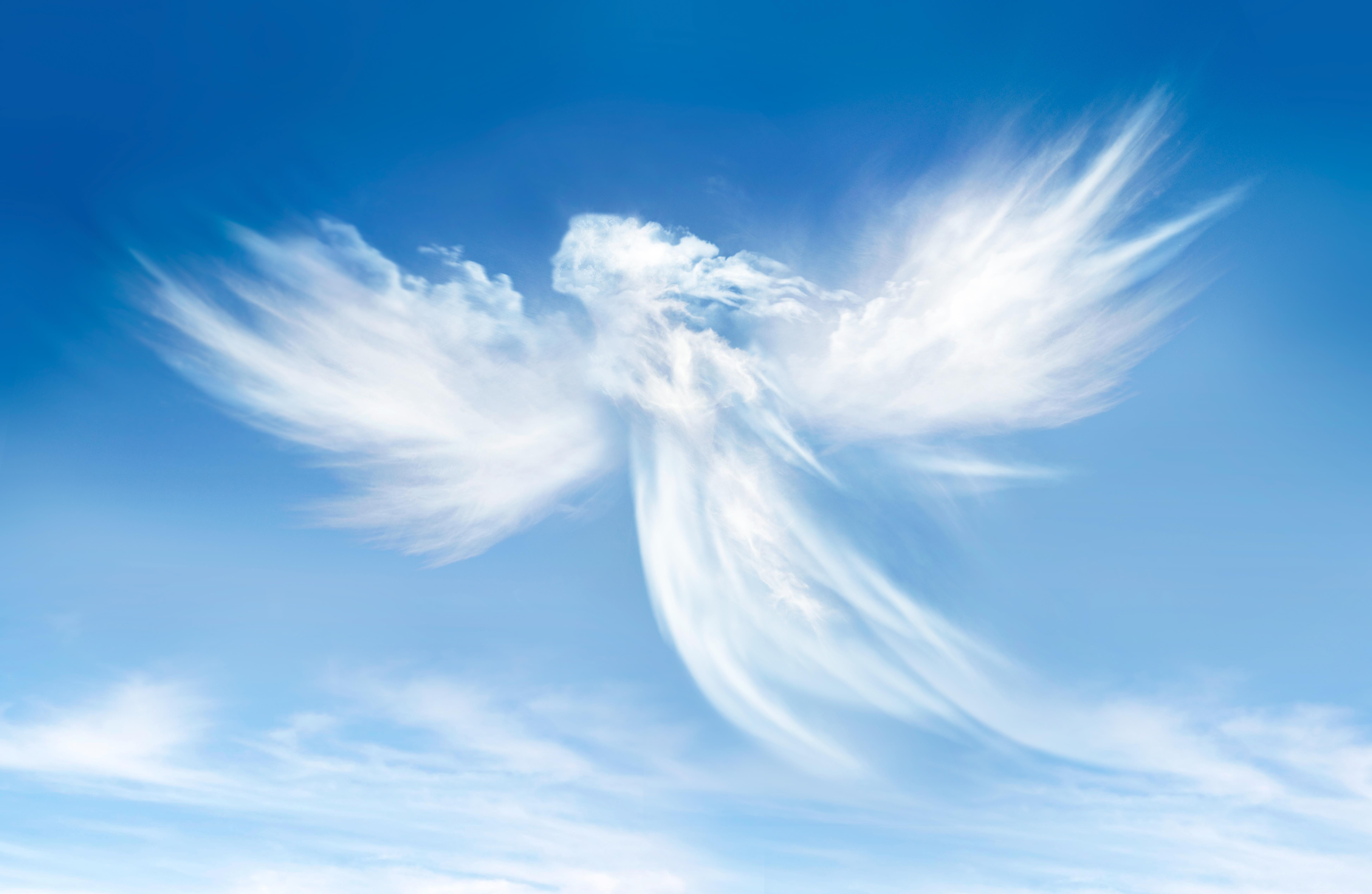 Startups Weekly: Angel vs  VC   TechCrunch