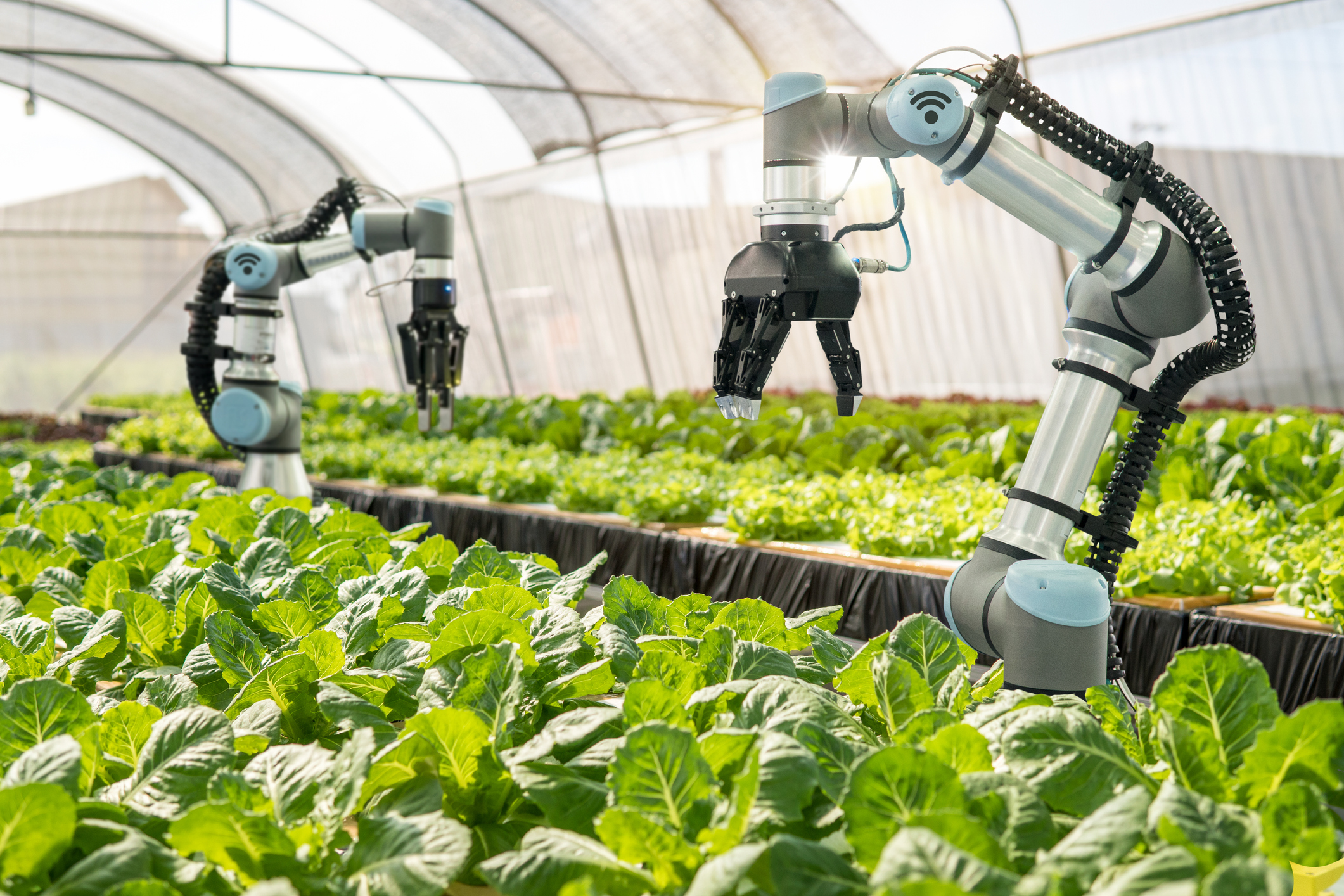 The Present And Future Of Food Tech Investment Opportunity Techcrunch