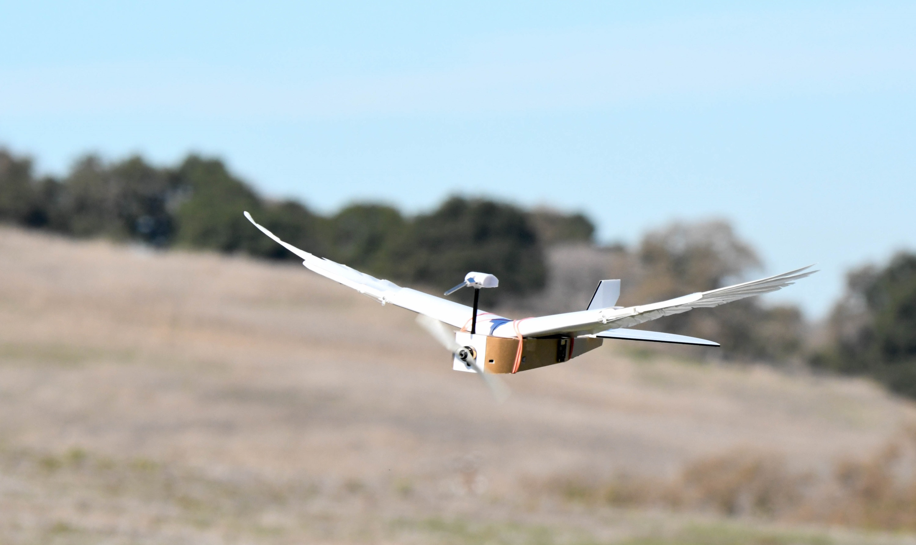'PigeonBot' brings aircraft closer to feathered-flight