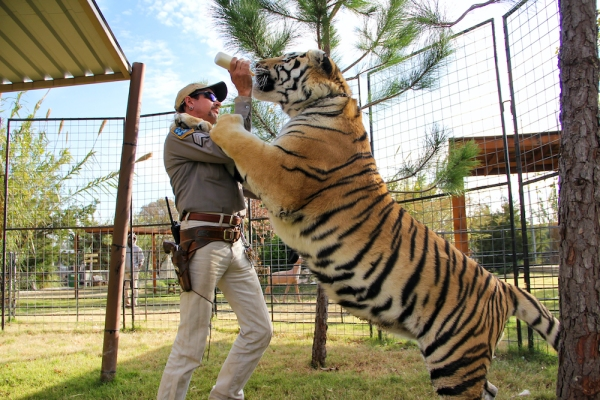 Photo of Original Content podcast: 'Tiger King' might be the wildest show on Netflix – TechCrunch | TechCrunch