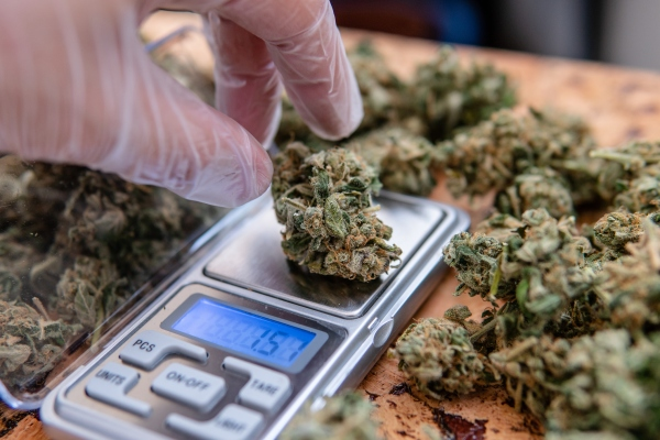 Cannabis legalization measures set to pass in 5 states