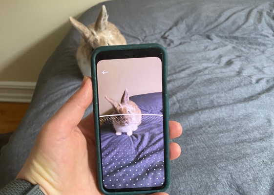 Google's latest experiment encourages social distancing through AR thumbnail