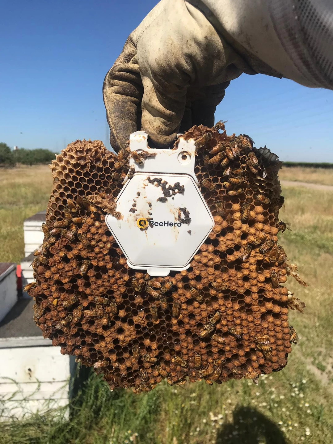 BeeHero smartens up hives to provide 'pollination as a service' with $4M seed round
