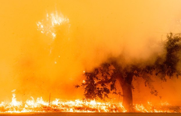 As the Western US burns, a forest carbon capture monitoring service nabs cash from Amazon & Bill Gates backed fund thumbnail