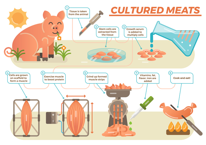 Future Fields is tackling cultured meat's biggest problem 3