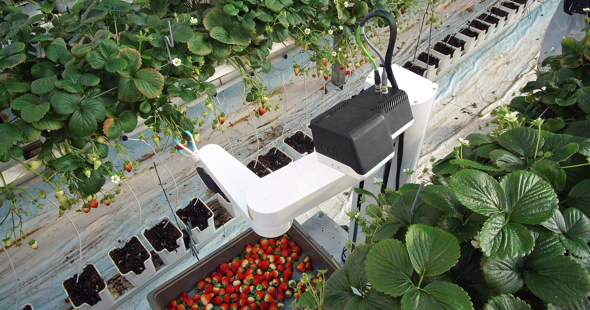 Root AI raises $7.2M seed round to deploy its harvesting robot amid COVID-19-fueled demand