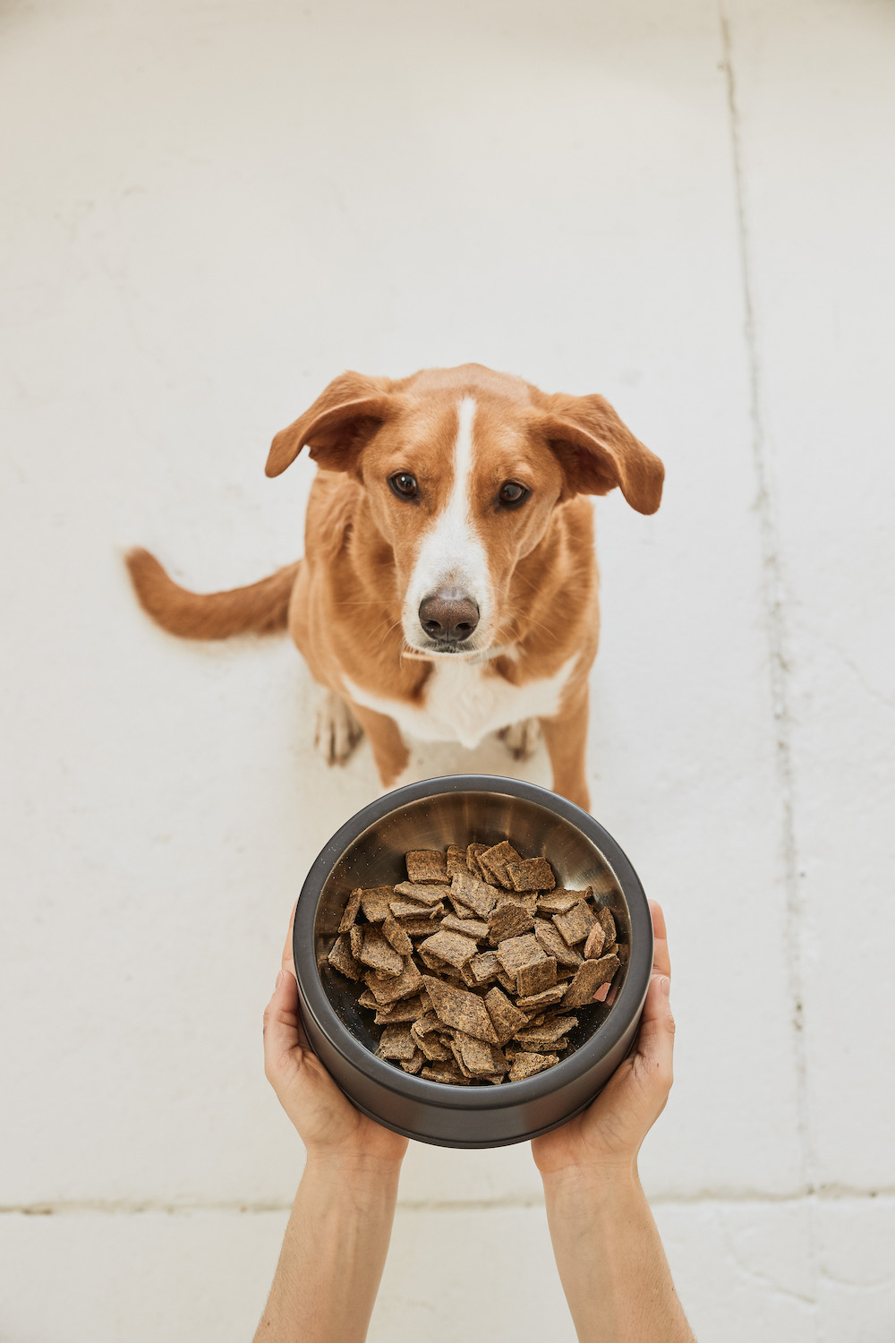 Dog food startup Sundays launches its air-dried kibble alternative